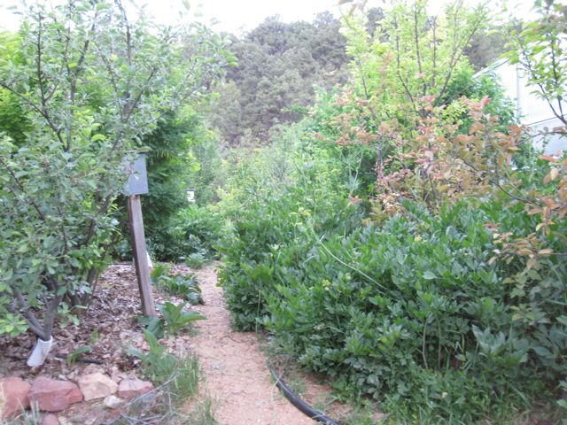 Permaculture Food Forest Ontario