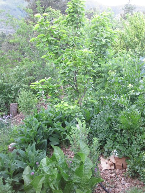 Central Rocky Mountain Permaculture | Apios Institute